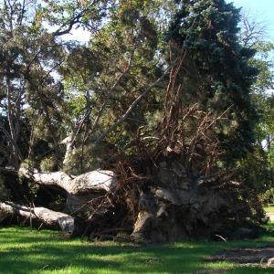 tree_down_204929