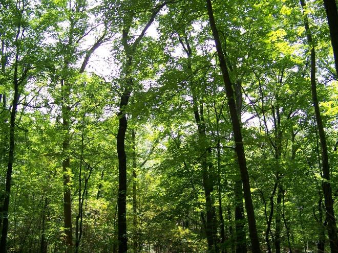 trees_195206