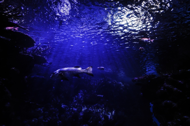 sea-water-ocean-dark
